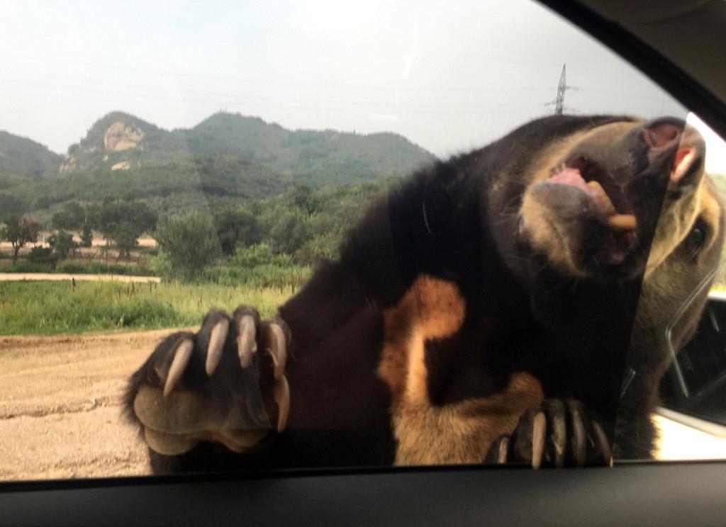 两游客遭老虎袭击 图揭八达岭野生动物园内自驾游