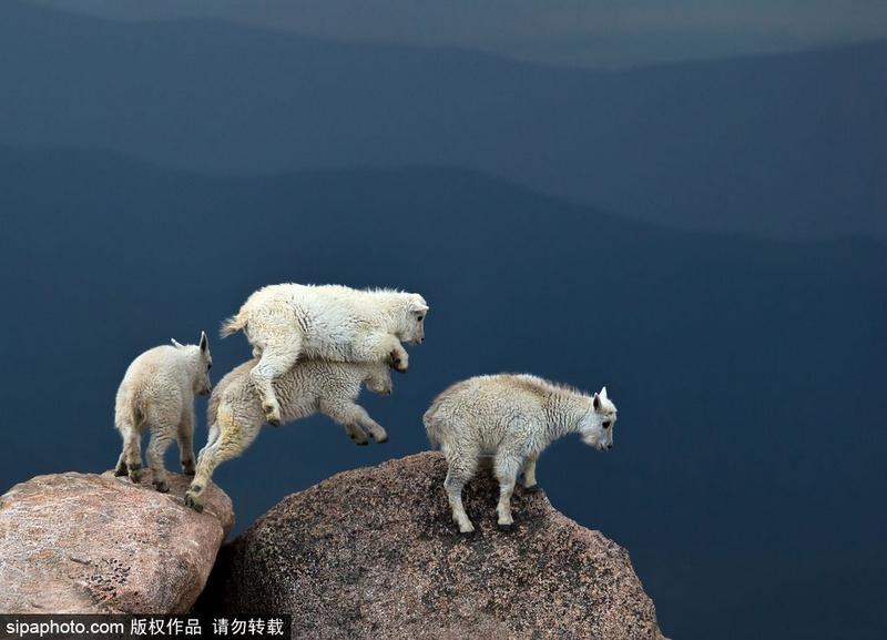tomajko拍摄到了这罕见的一幕,在雷电交加的天气里,埃文斯山山头的小