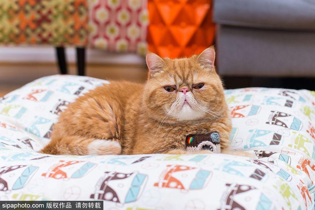 壁纸 动物 猫 猫咪 小猫 桌面 1024_684