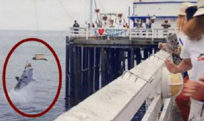 场面尴尬 直播放生海豹却被鲨鱼吃了
