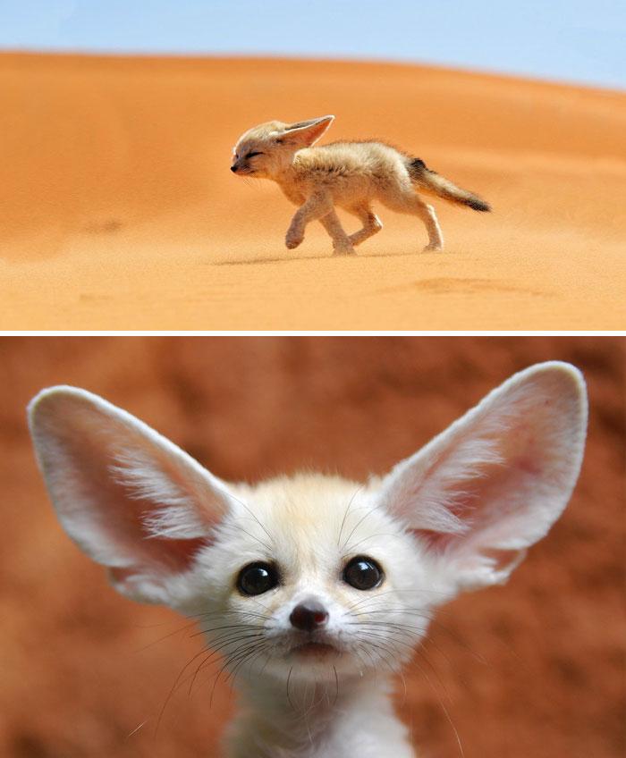 这些动物宝宝你能认识几个?