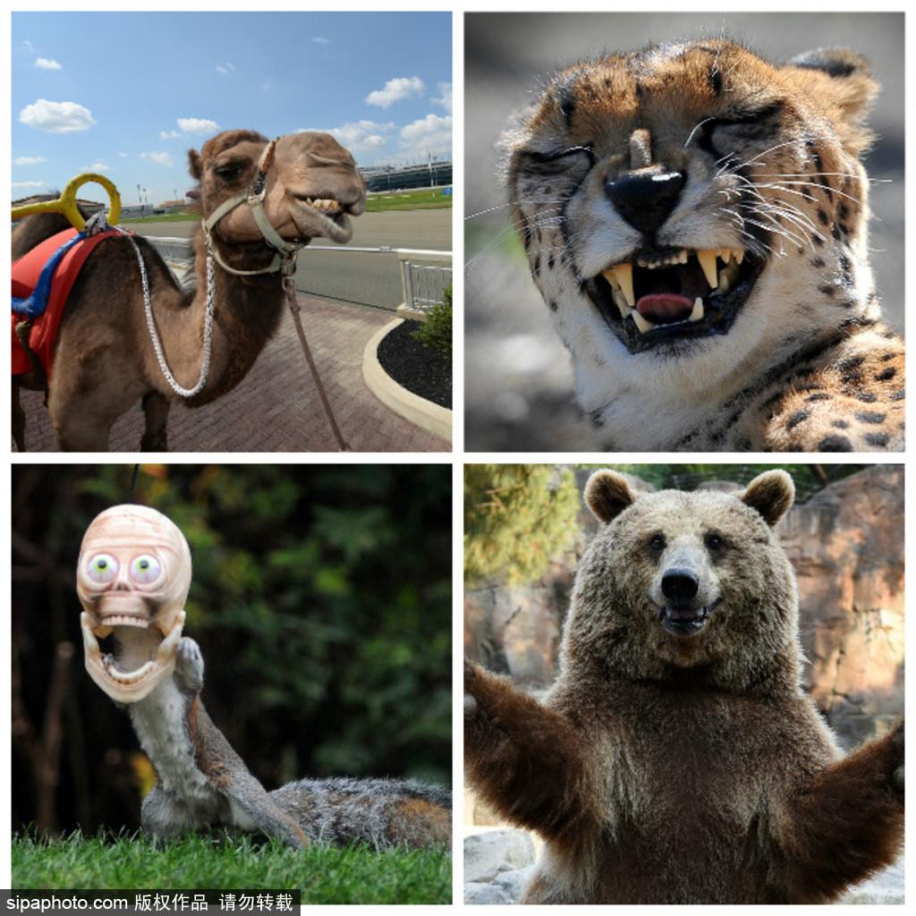 """世界微笑日 看动物笑容中的""""语言"""""""
