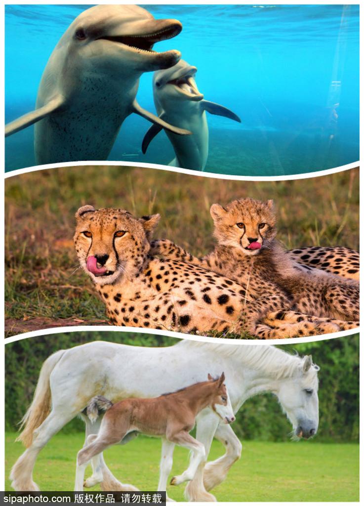 长大后我将成为你 母亲节盘点动物界母子神同步