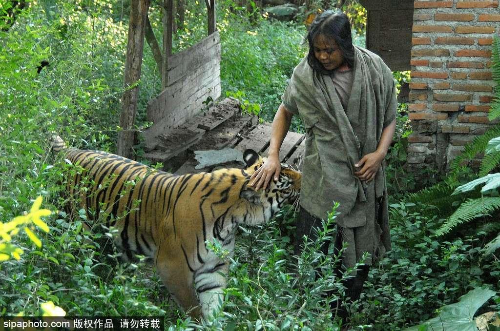 人与自然相处模式 印尼男子养老虎亲密无间