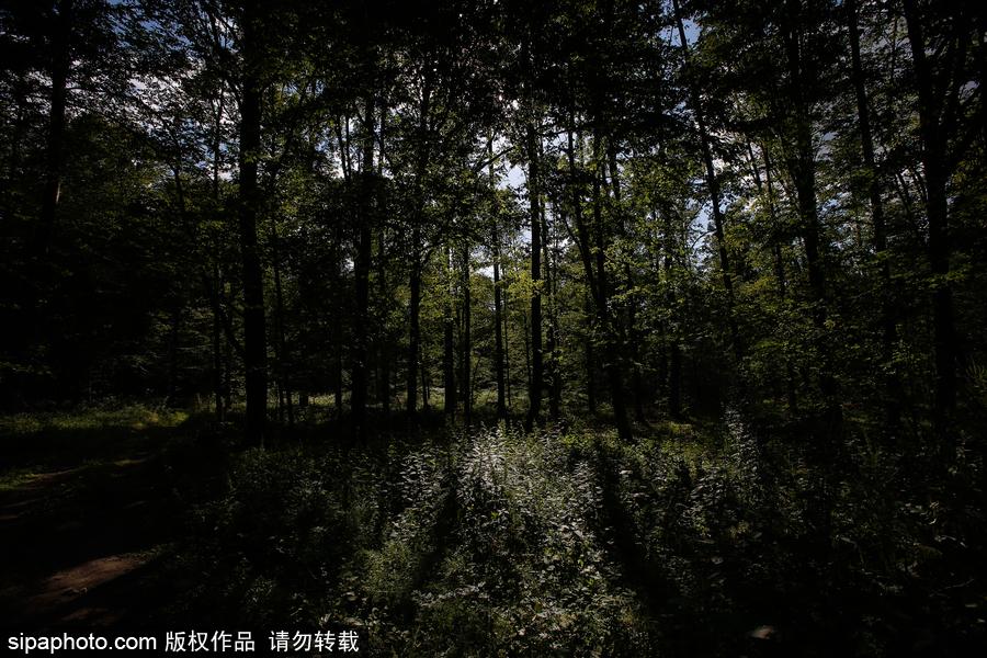 欧洲最后的原始森林——波兰比亚沃耶扎国家公园
