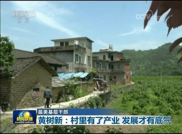 【最美基层干部】黄树新:村里有了产业 发展才有底