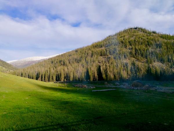 红外线镜头中的雪豹  WWF China/新疆阿尔泰山两河源自然保护区 红外相机拍摄到的雪豹体态健康,拍摄时间为今年1月和4月,拍摄地点位于库尔木图,海拔两千四百米左右。此处地貌为高山裸岩,冬季被积雪覆盖。红外相机在该区域也多次拍到了雪豹在当地的主要猎物北山羊。带队开展本次监测的两河源保护区工作人员郭军访表示,拍摄到雪豹的红外相机架设在山脊上,视野开阔,便于雪豹观察周围地形与猎物,是雪豹常出没的地方;且该处有一条野生动物踏出的兽道,也是雪豹常会选择的路线。因为地形崎岖, 北山羊数量
