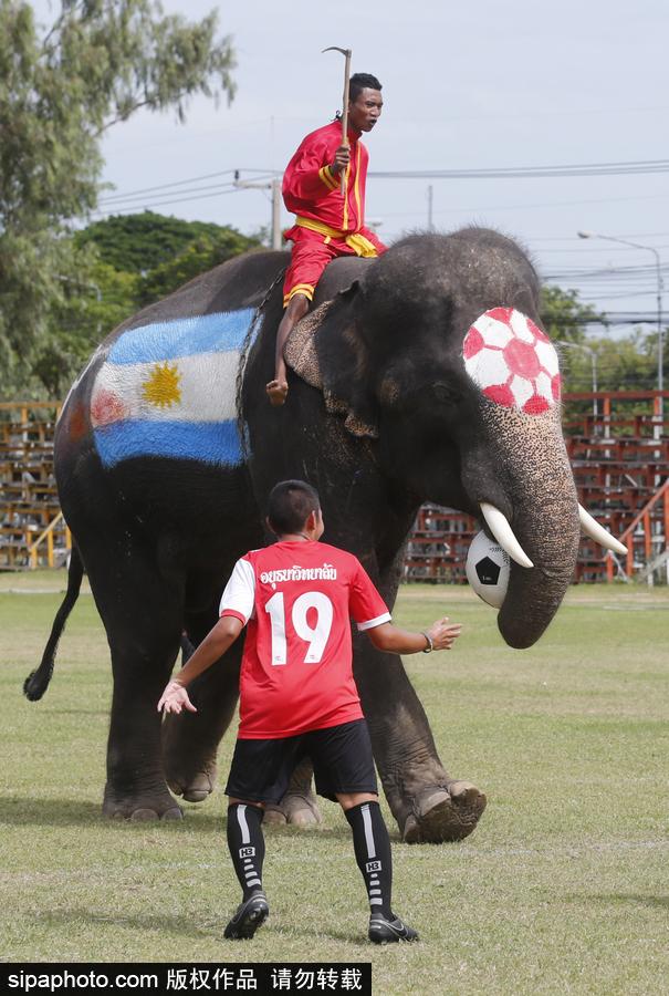 泰国大城府举行大象球赛 迎接2018俄罗斯世界